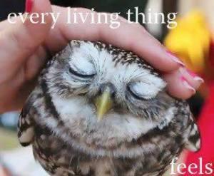 living.things.feel